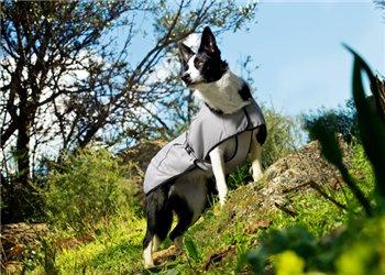 Интернет-зоомагазин Red Dog: только качественные товары для собак и кошек! B13dbd5db44c