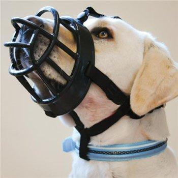 Интернет-зоомагазин Red Dog: только качественные товары для собак и кошек! 6c1cfc08f8d3