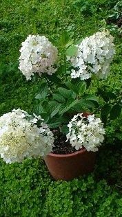 И мои хвастушки-цветушки! - Страница 36 A43b18cc99b6