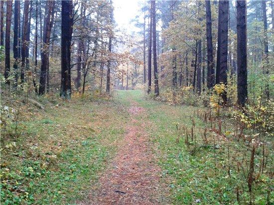 Осень, осень ... как ты хороша...( наше фотонастроение) - Страница 5 60d44900a901
