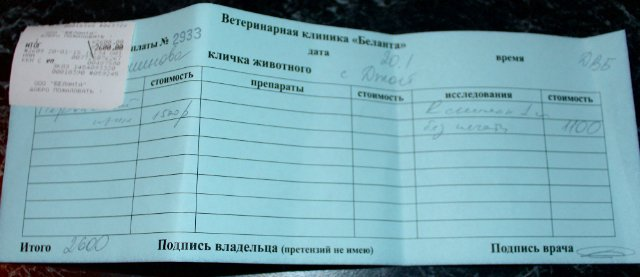 Москва, Джой, кобель, д.р.18.09.2014 3f43be2554cd