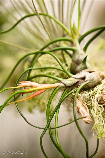 Выставка орхидей в Государственном биологическом музее им. К.А.Тимирязева 056799b89a65