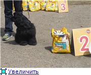 ГРУМЕР ШЕМЕТОВА ОКСАНА E95d97ee06c5t