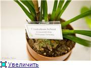 Выставка орхидей в Государственном биологическом музее им. К.А.Тимирязева 48b736f160a2t