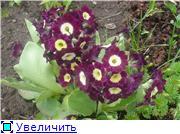 Растения для альпийской горки. - Страница 2 7625c9cd758at