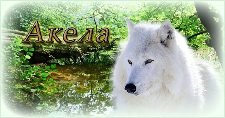 Акела