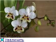 Sevgilim ( мои любимые) 55705e5446b7t
