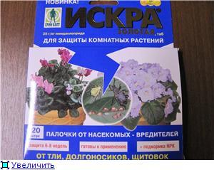 Розы в комнатной культуре - Страница 3 Da6579f93e0ft
