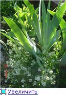 Растения для альпийской горки. - Страница 2 B1ea207380a7t