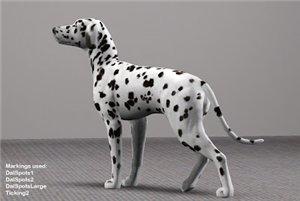 Собаки - Страница 3 Cd6a848fe557