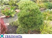 Cад Людмилы Ивановой из черкасс E8b6a0349d10t