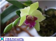 Sevgilim ( мои любимые) 9022e752e27et
