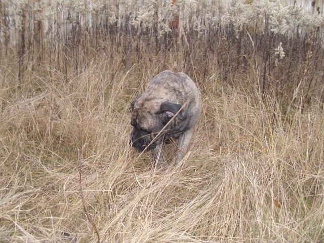 Собаки Татьяны Моисеенковой, кот Мензурка - Страница 3 93b4e124d2b5