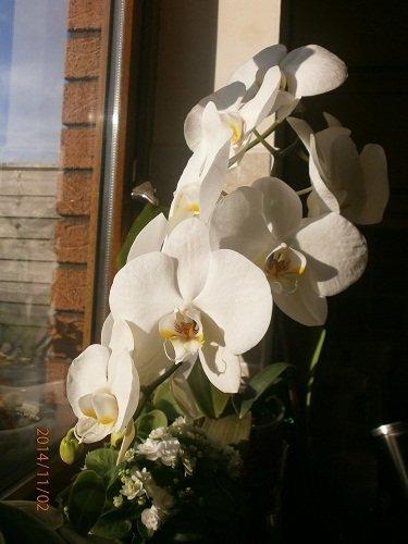 Разводите ли дома цветы и какие? - Страница 34 37d8485f0525