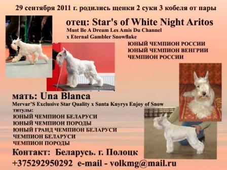 Белого цвершнауцера щенки п-к Лангер Татос 54be18bc650c