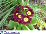 Растения для альпийской горки. - Страница 2 4c34d74871a9t