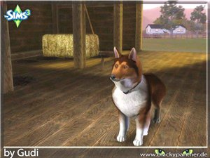 Собаки - Страница 2 Ef46f86561f6
