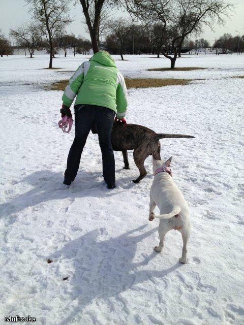 Наши собаки, друзья и гости, кот Мензурка - Страница 32 3168c397c260