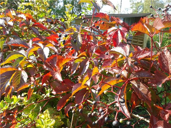 Осень, осень ... как ты хороша...( наше фотонастроение) - Страница 4 Dd084de13d4f
