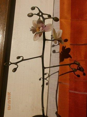 Разводите ли дома цветы и какие? - Страница 34 C7e6d02362bc