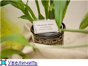 Выставка орхидей в Государственном биологическом музее им. К.А.Тимирязева 6a73ff4f2750t
