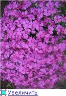 Растения для альпийской горки. Eb9088c19537t