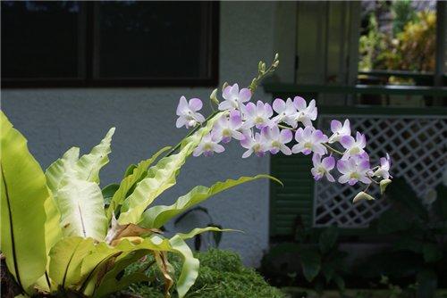 Из зимы в лето. Филиппины 2011 - Страница 8 4559600e3b3f