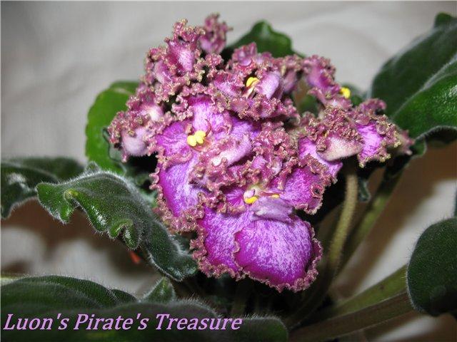 Lyon's Pirates Treasure (S. Sorano) - Страница 5 C40be6f65934