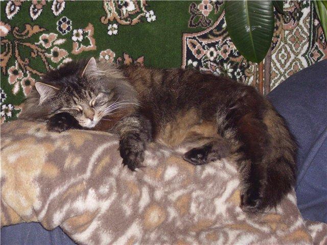 Собаки Татьяны Моисеенковой, кот Мензурка - Страница 3 B626ff23c70b
