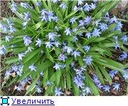 Сад моей Свекрови 0990af75999bt