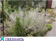 Cад Людмилы Ивановой из черкасс 36eae3833ebat