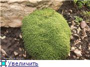 Cад Людмилы Ивановой из черкасс 0edb1c821fa8t