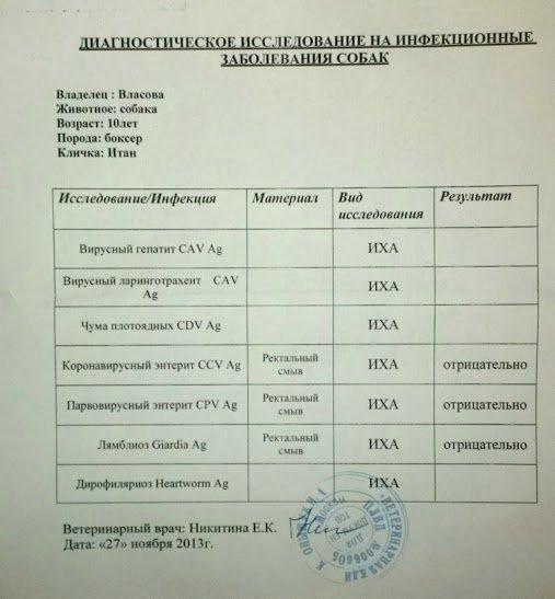 Москва, Итон, кобель, 10 лет F031345c4e24