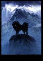 Дата премьеры мувика «Tibetan Dog» 83815acfa791