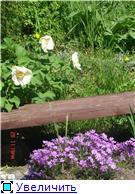 Растения для альпийской горки. - Страница 2 42c44d704113t