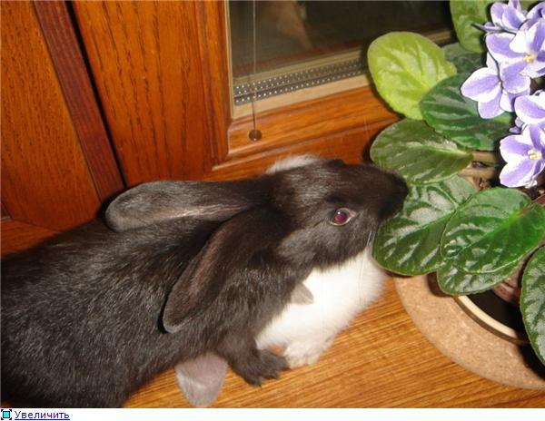 Кролики, декоративные и не очень) - Страница 3 8743946dc6b8t