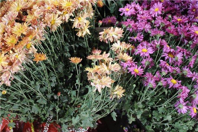 XIX Международная выставка Ландшафт и Приусадебное хозяйство-2012 98507b33b47b