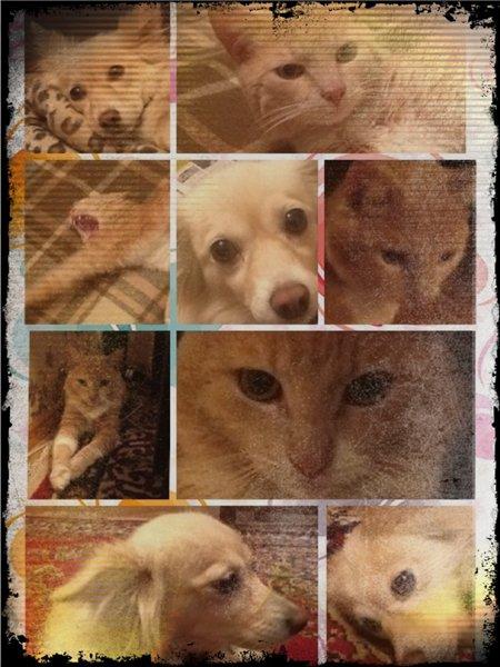 Собака - друг человека - Страница 2 Cb1edfd13521