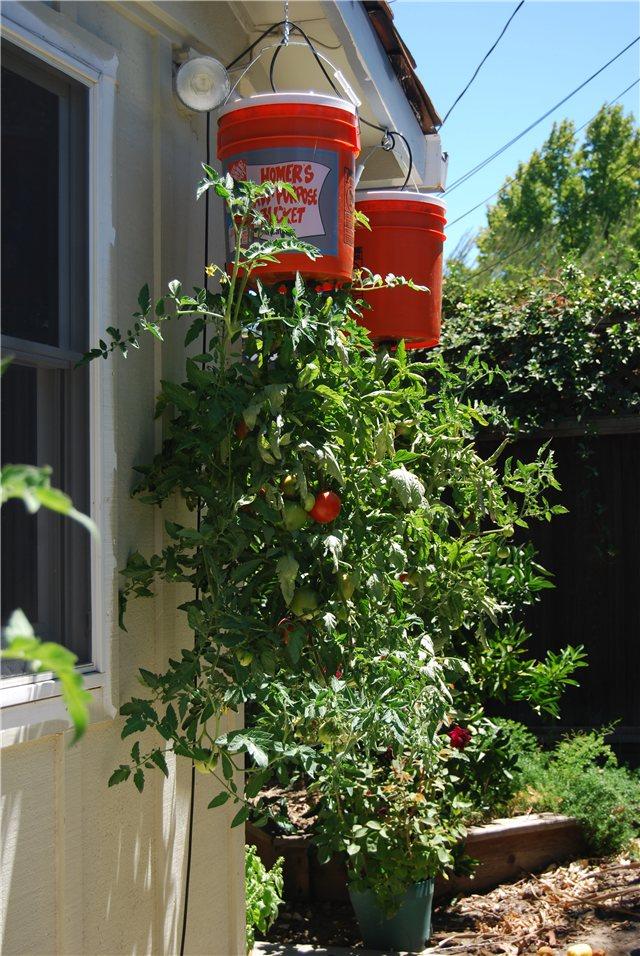 Технология выращивания помидоров (томатов) вниз головой C9107193ad65