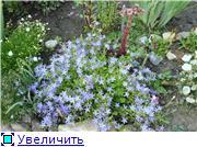 Растения для альпийской горки. 040feb173f5at