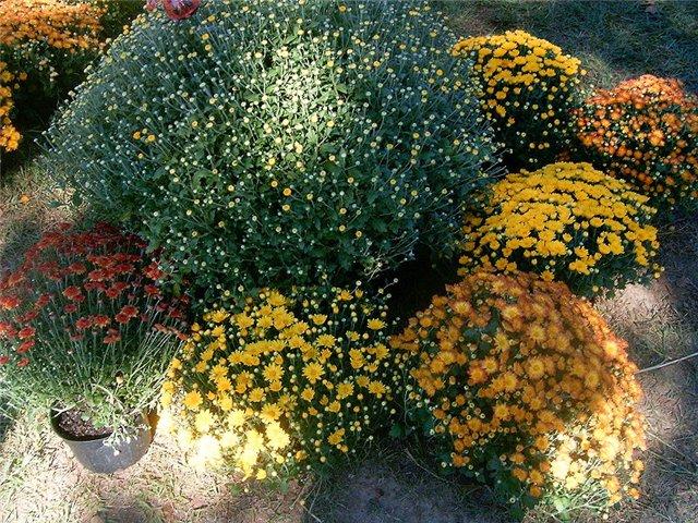 Растения, связанные с драконами 986a1cec4c5a