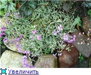 Растения для альпийской горки. 57f9bd721659t