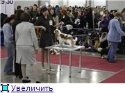"""""""ЕВРАЗИЯ-2012"""" C22d1cba5feat"""
