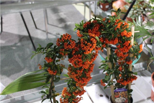 XIX Международная выставка Ландшафт и Приусадебное хозяйство-2012 7ea38ad1c6a1