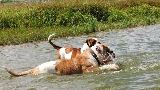 Собаки питомника Carpen Diaz - Страница 2 C35fab61dd92
