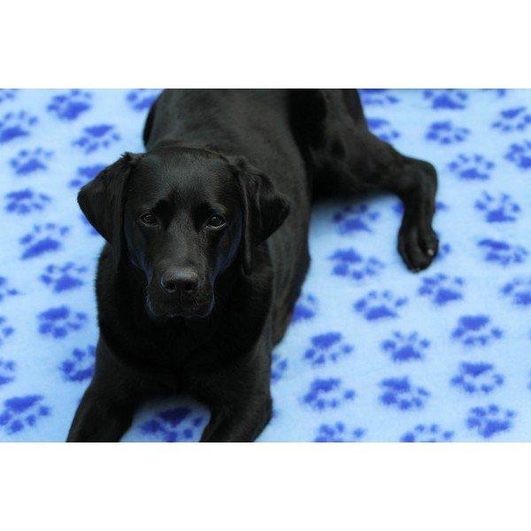 Интернет-магазин Red Dog- только качественные товары для собак! 9a30dd09c855