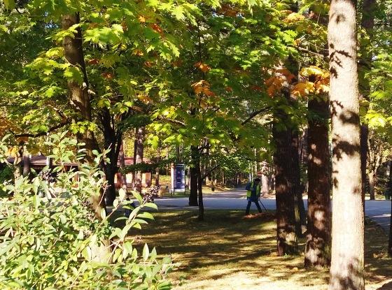 Осень, осень ... как ты хороша...( наше фотонастроение) - Страница 8 5cc2c54ca9ac