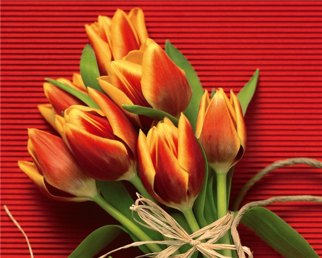 Поздравляем С Днем Рождения Гордееву Елену (ЗЛАТУСЯ) 8b94bd99f760