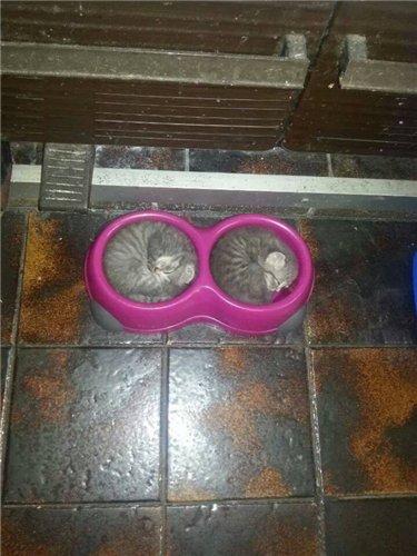 Сама по себе гулёна (о кошках) Ab14fcadce8a