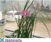 Зефирантес - Страница 2 D63f776aca0bt